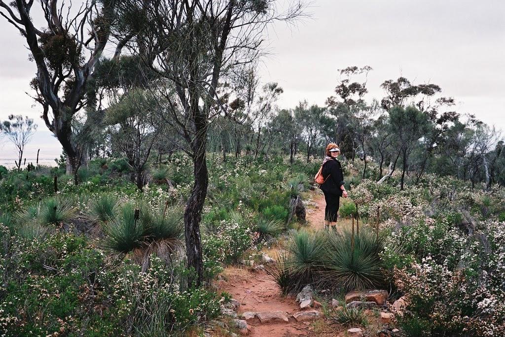 Red on the Dutchman's Stern hiking trail, South Australia