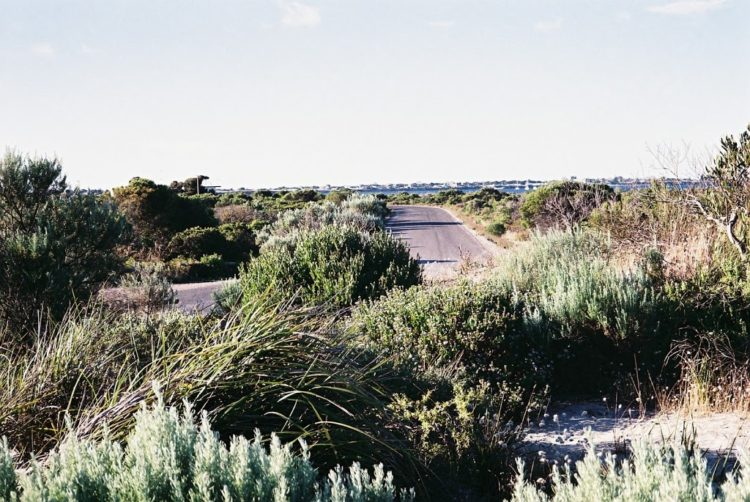 Coastal Vegetation at Sultana Point