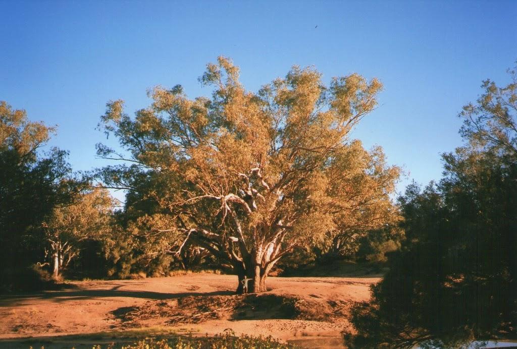 Pilchard in the Cooper's Creek Creekbed