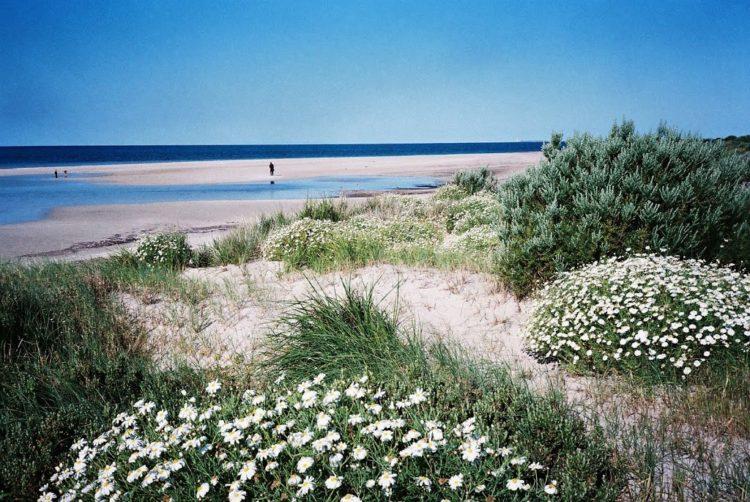 Coastal Dune Vegetation, Sultana Point, SA