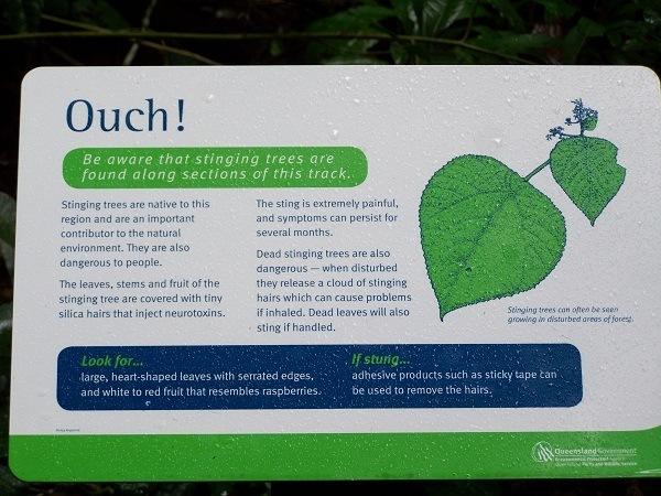 Stinging-tree-sign