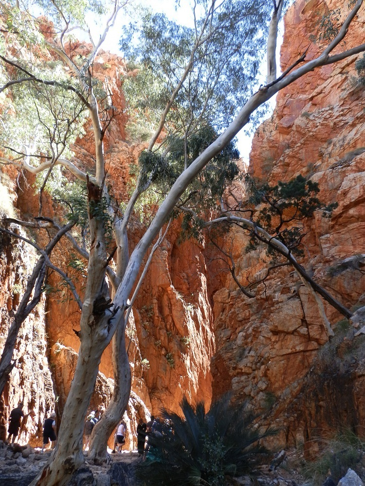 Entrance to Standley Chasm