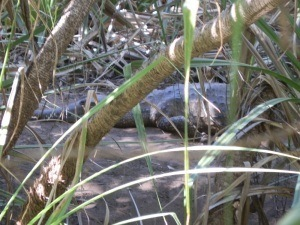 Lurking on the banks of Timber Creek!