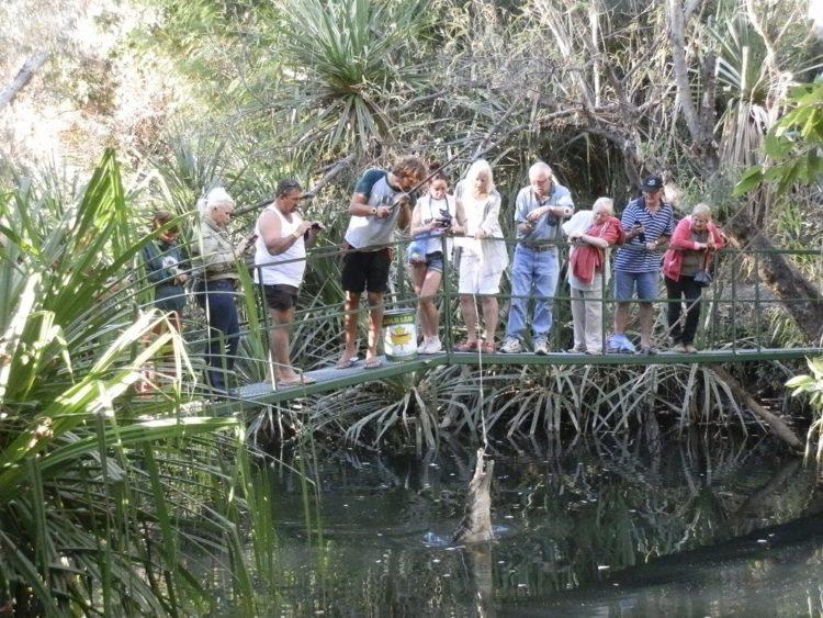 Feeding the freshies at Timber Creek, Northern Territory