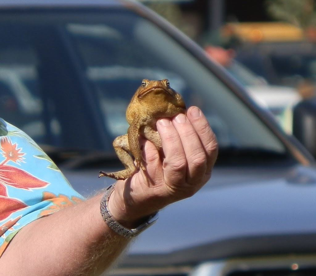 Thommo sells a Cane Toad, Kununurra, Western Australia