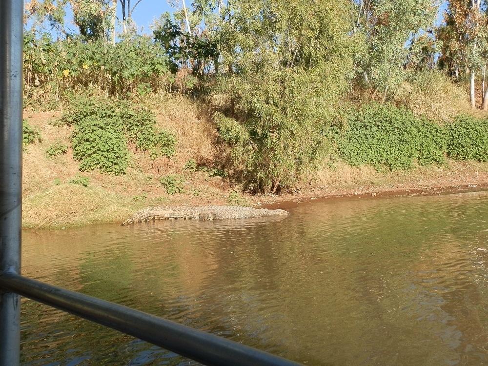 Croc-spotting, Victoria River Cruise, via Timber Creek, NT