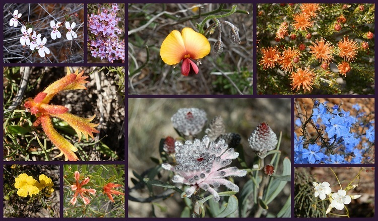 Tathra National Park Wildflowers Western Australia