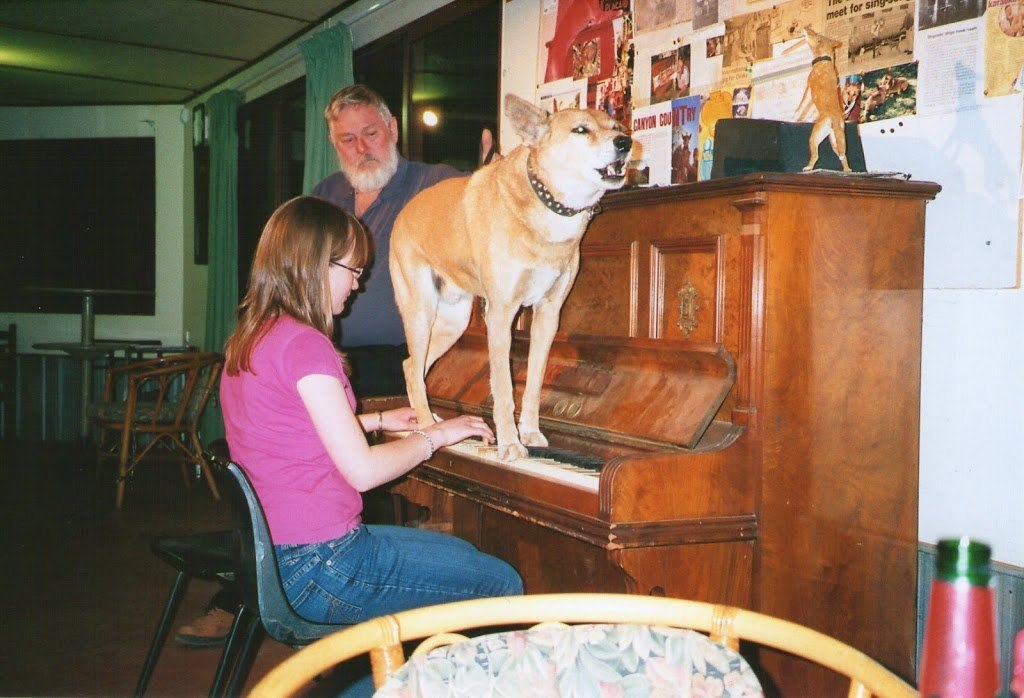 Dinky, the singing, piano playing Dingo, Stuarts Well, Northern Territory