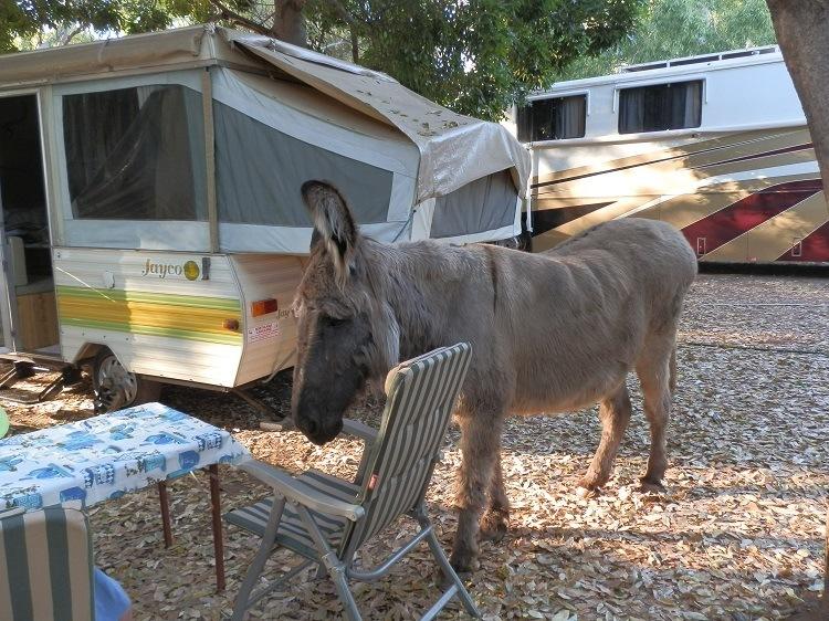 The Café has a visitor, Wyndham Caravan Park, Western Australia