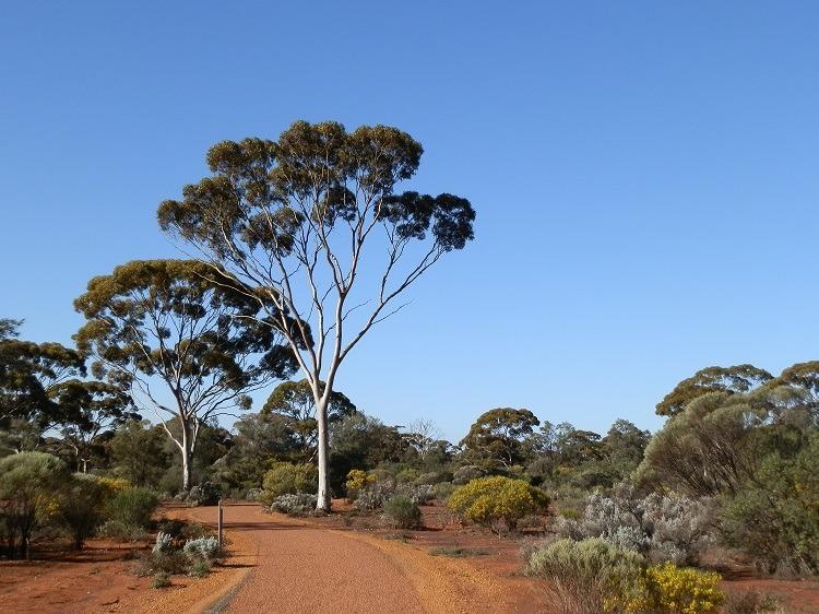 Karlkurla Bushland Park, Kalgoorlie, Western Australia