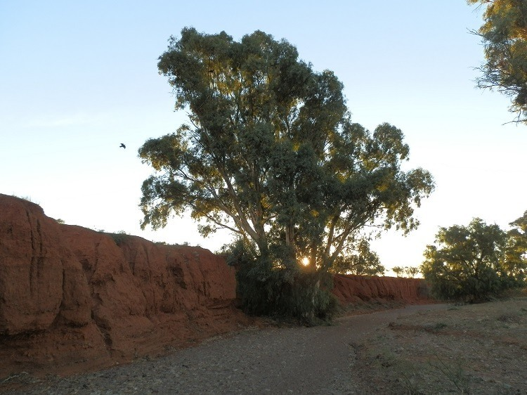 Sunset at the Creek bed, Carrieton South Australia