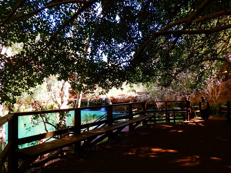 Fern Pool, Dales Gorge, Karijini National Park