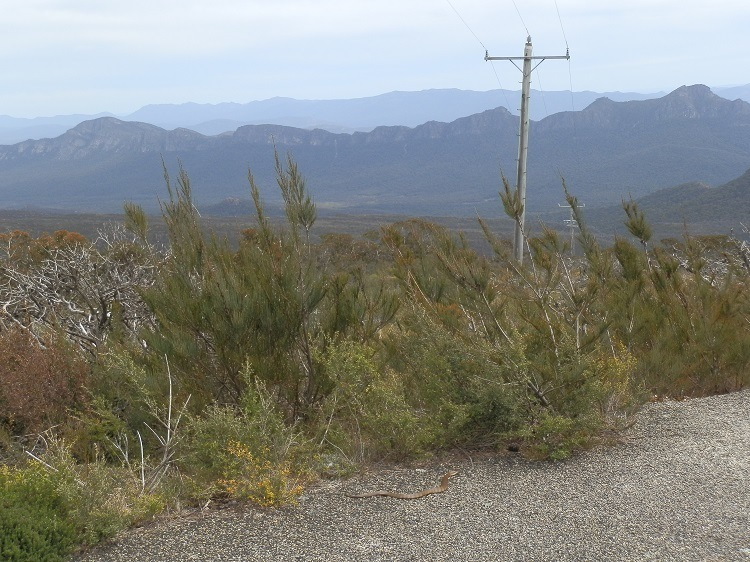 What's that on the Mt William Road in the Grampians National Park, Victoria?