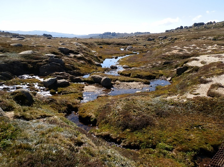 Snowy River Headwaters, Kosciuszko National Park