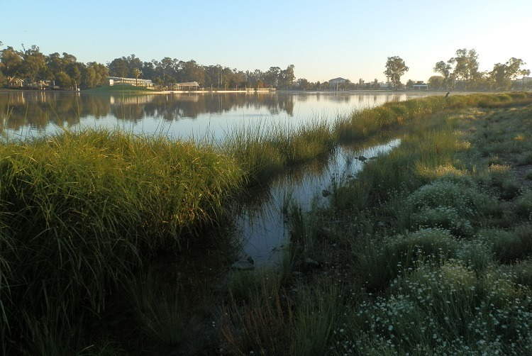 Early morning at Lake Victoria, Shepparton, Victoria