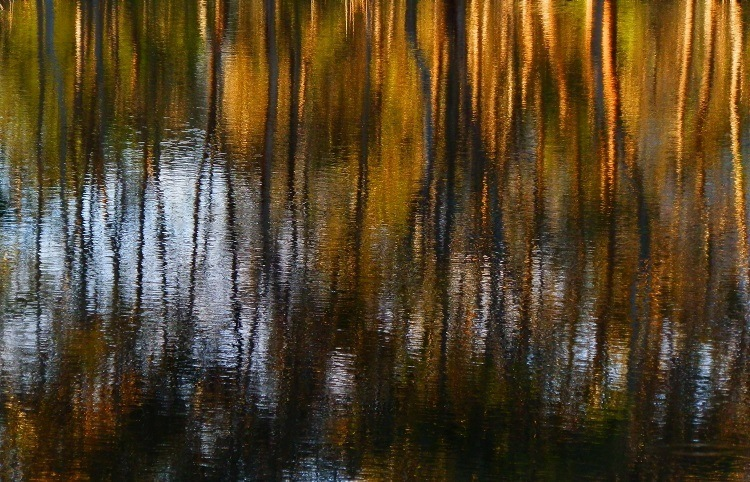 Reflections in the Dunkeld Arboretum Lake, Southern Grampians, Victoria
