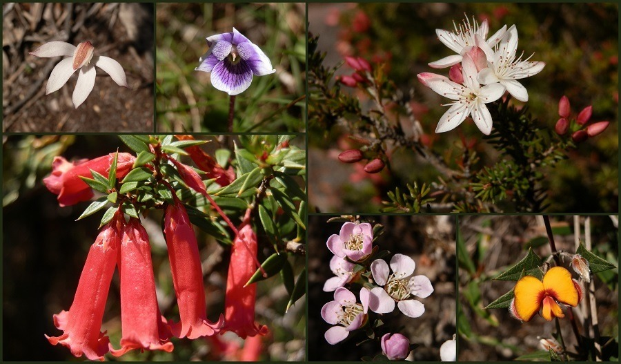 Mt Abrupt Wildflowers