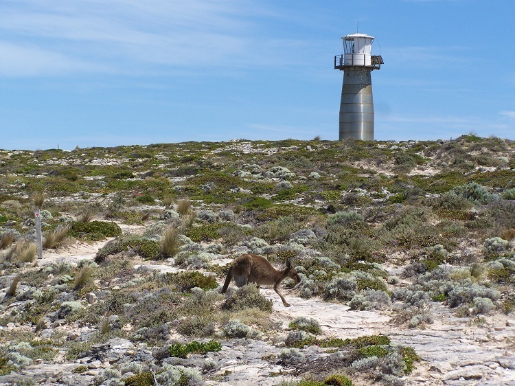 Is that a kanga I see before me??  West Cape Lighthouse, Innes National Park, South Australia