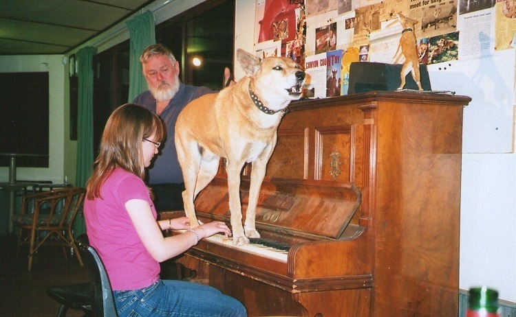 Dinky, the Singing, Piano Playing Dingo, Stuarts Well
