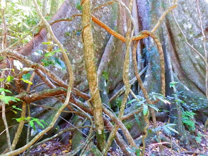 Border Loop Track Rainforest