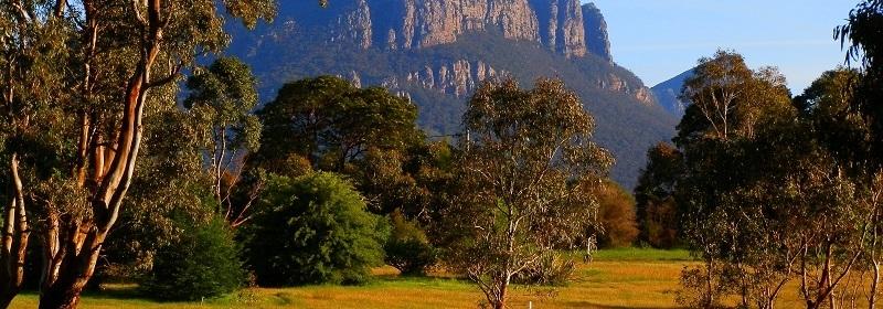 Mt Abrupt from Dunkeld Arboretum