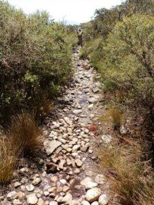 Mt Abrupt Summit Hike Track