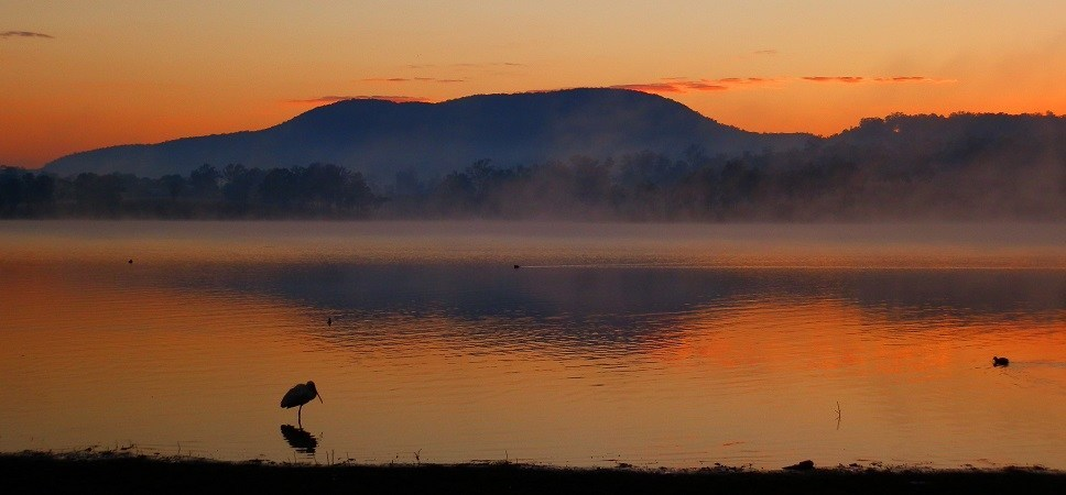 Sunrise with Spoonbill, Lake Moogerah