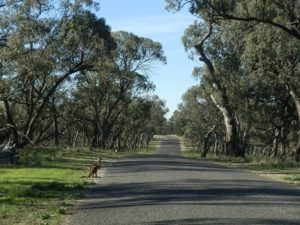 Entering Wyperfeld National Park