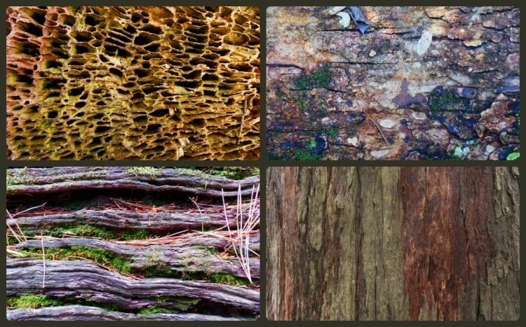 Aged Logs