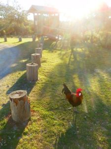 Dunny - and Chook! Broadwater National Park, NSW