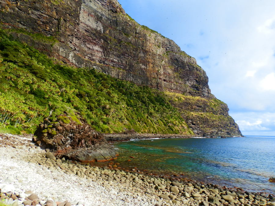 Little Island, Kentia Palms and Providence Petrel colony on Mt Lidgbird cliffs, Lord Howe Island