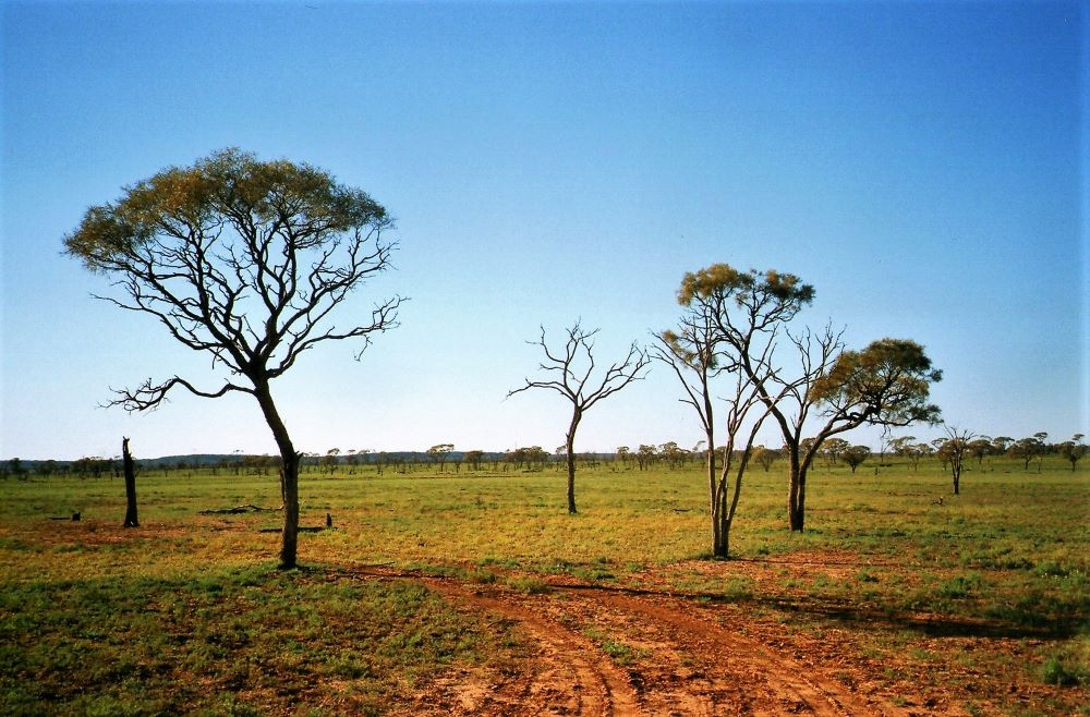 Outback Scenery, Quilpie, Queensland