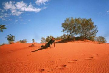 Sand Dune Survivor, Windorah QLD