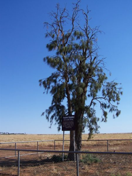 Kooree Yuppiree (or Aboriginal Corroboree) tree, Boulia, Queensland