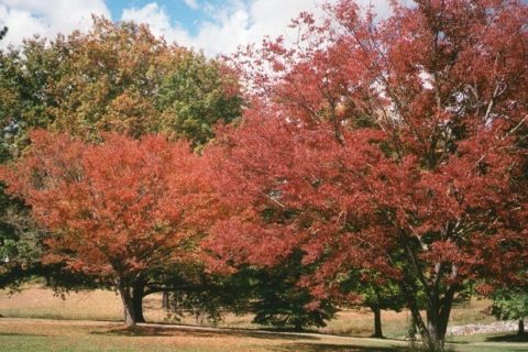Autumn trees, Uralla, New South Wales