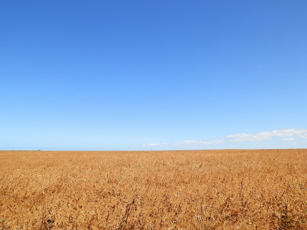Crops on Southern Yorke Peninsula, South Australia