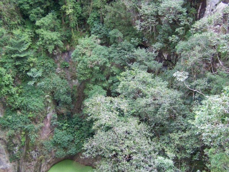 Rainforest on the crater wall, Mt Hypipamee, Queensland