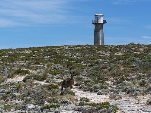 Still life with Lighthouse and Kangaroo, Southern Yorke Peninsula, South Australia