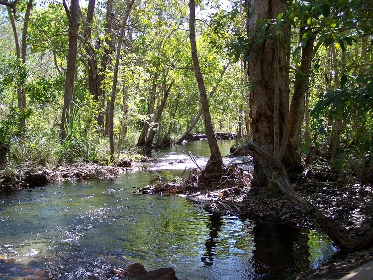 Litchfield National Park, Northern Territory (pic by Pilchard)