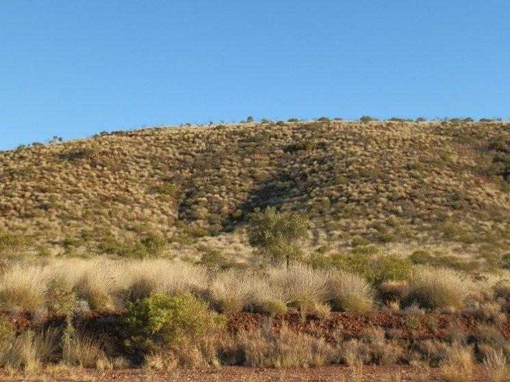 Just can't have too much spinifex ... Larapinta Trail, between Ormiston Gorge and Glen Helen Gorge
