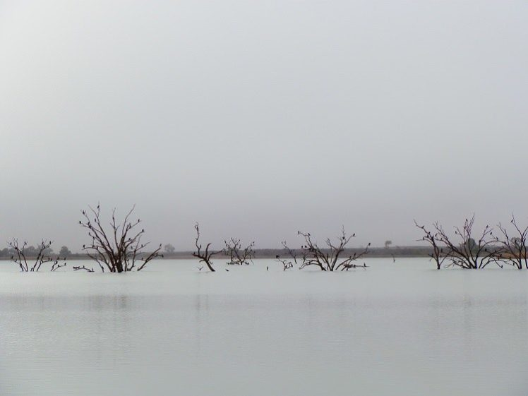 Cormorants in the Mist, Lake Cullulleraine, Victoria