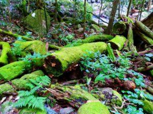 Mossy Logs at Natural Bridge