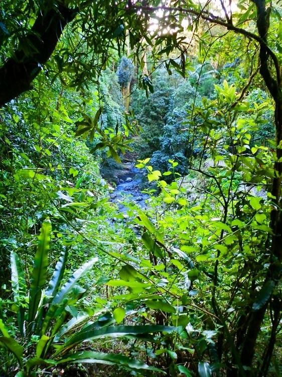 Creek at Natural Bridge through the Rainforest