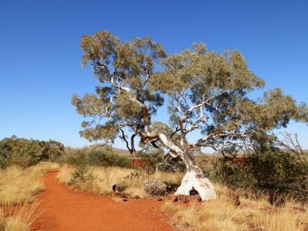 Gorge Rim Walk, Dales Gorge, Karijini National Park, Western Australia