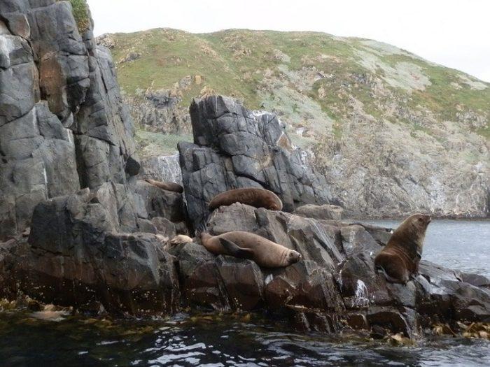 Seals near Bruny Island
