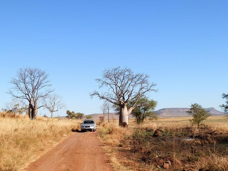 Track to Marlgu Billabong