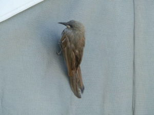 The Bird dries off after being rescued