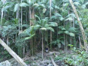Palm Forest Walk, Sheepstation Creek