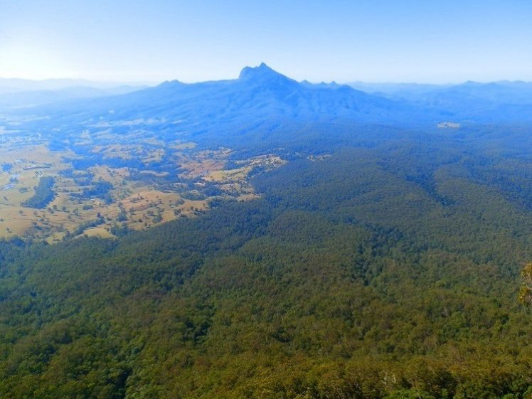 Mt Warning from Blackbutts Lookout