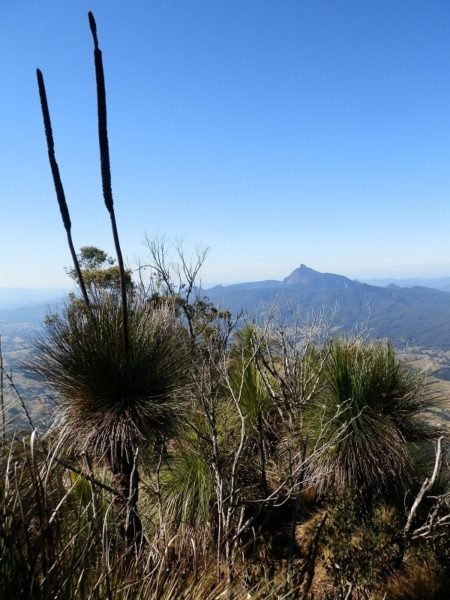 Mt Warning from the Pinnacle Lookout